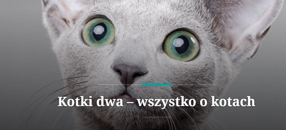 Blog o kotach rasowych